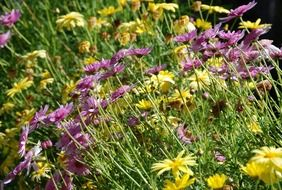 wild meadow flowers
