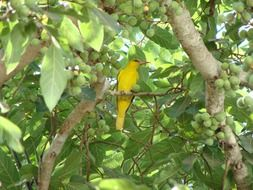 bright exotic yellow bird on a tree