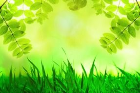 spring green leaves and grass