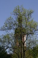 steeple behind spring trees at sky