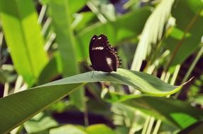 black butterfly on a green leaf of a plant