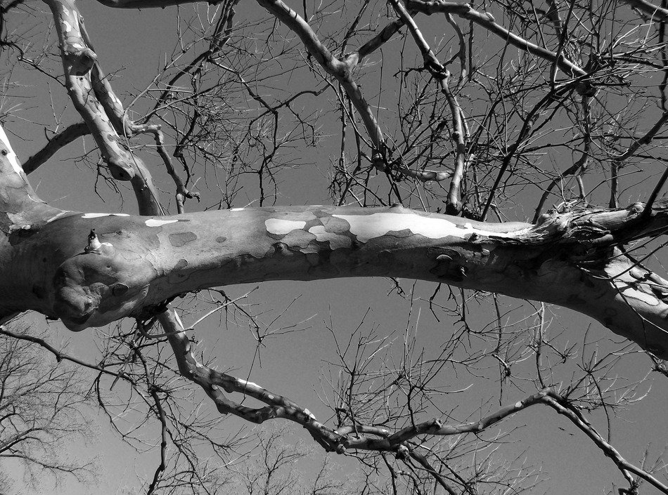 black and white picture of tree branch