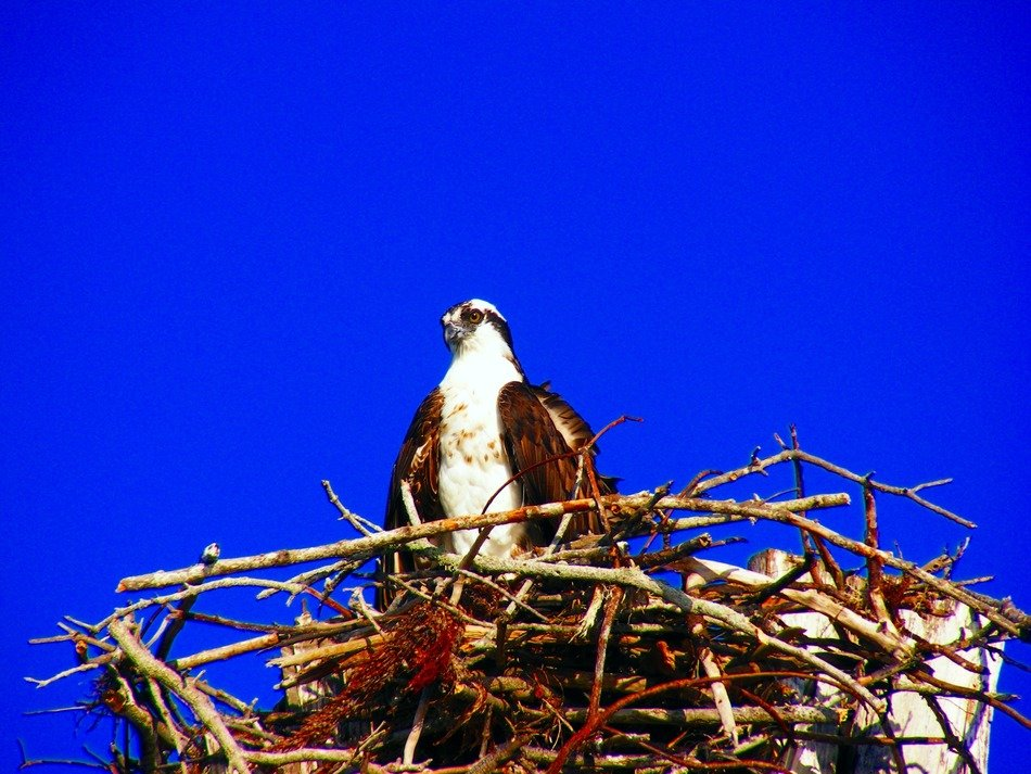 bird in the nest on the background of bright blue sky