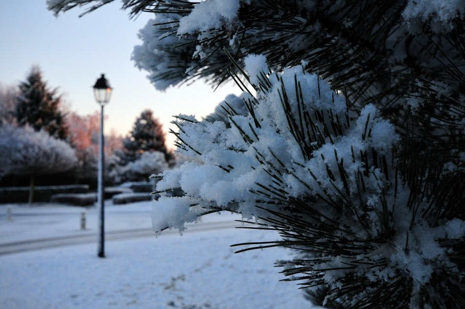 pine and street lantern in snowy park, morning landscape
