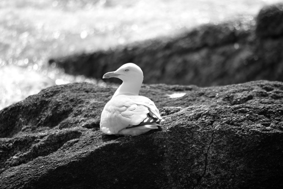 white seagull on rock at water