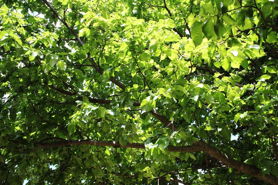 Picture of green bright tree
