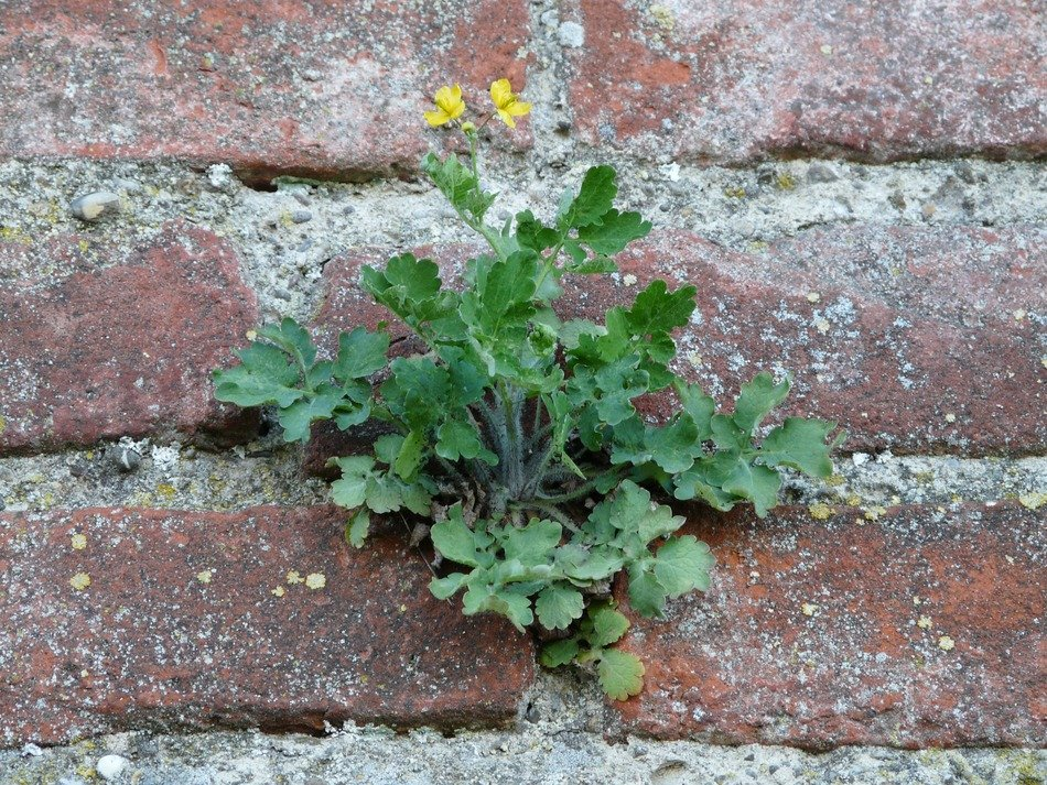 plant in a brick wall