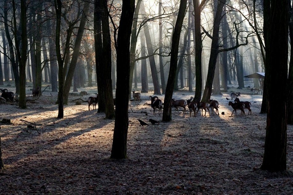 animals in the forest in the glare of light
