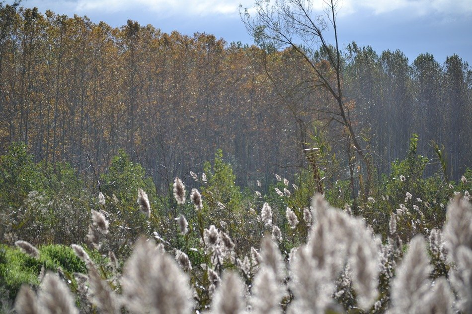 fluffy grass on the background of the autumn forest