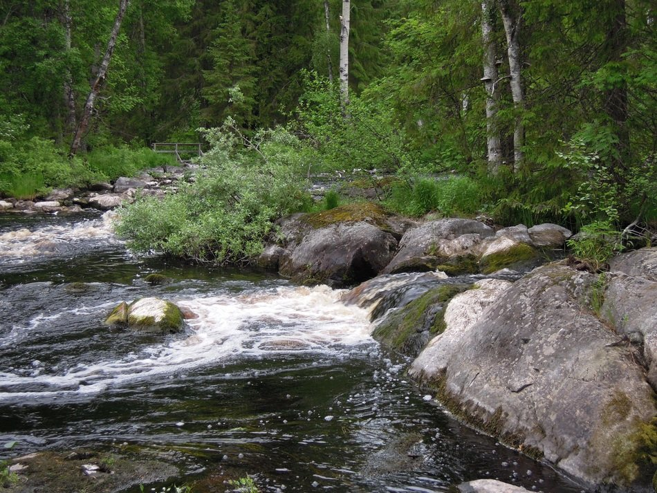 the picturesque landscape of the Finnish forest