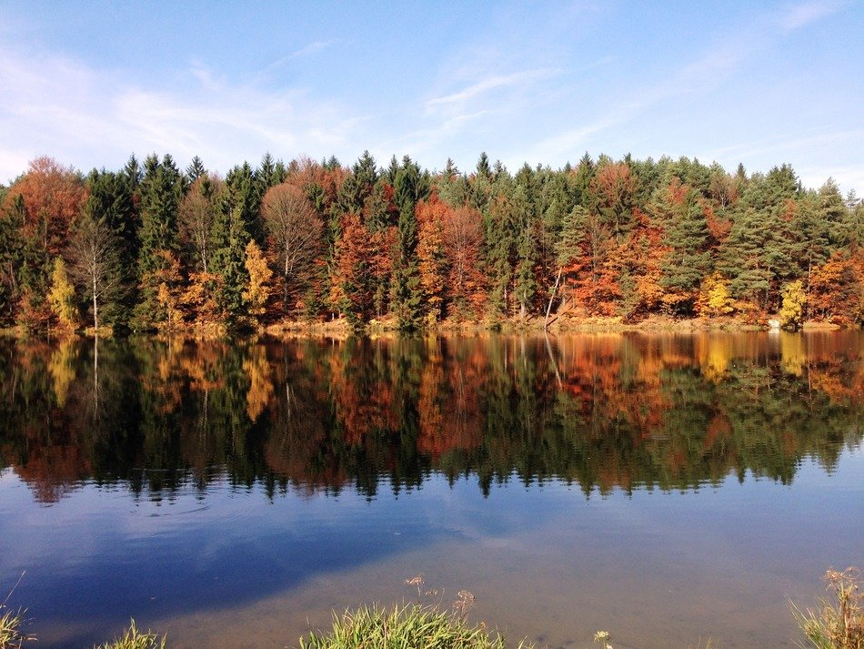 reflection in lake of autumn forest
