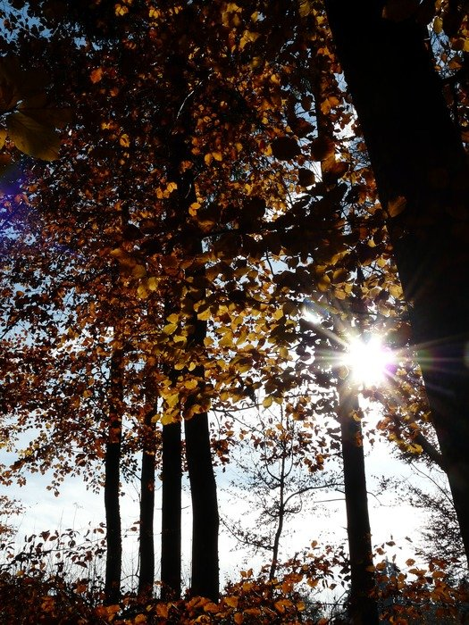 the sun through the leaves of trees in autumn