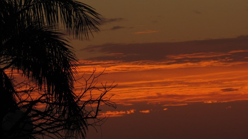palm tree silhouette at dark sunset