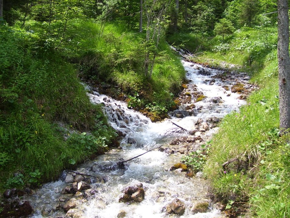 mountain stream among green vegetation on a sunny day