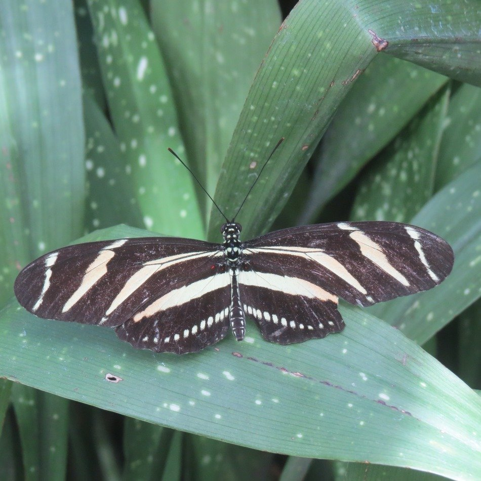 striped butterfly on green leaves