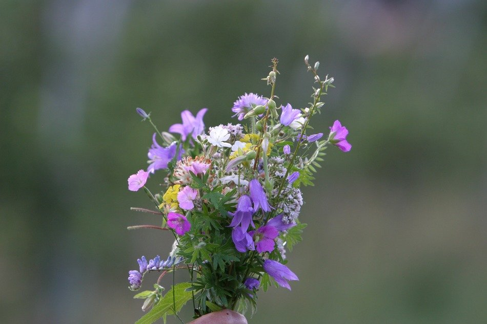 a bouquet of mountain flowers