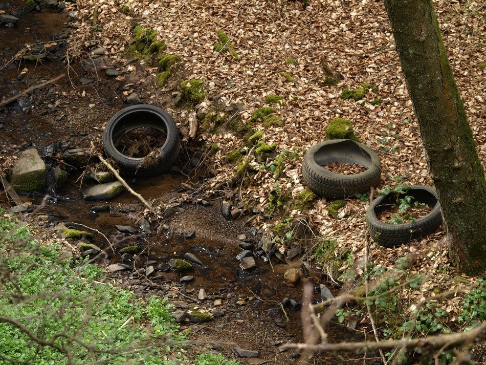 car tires in the woods