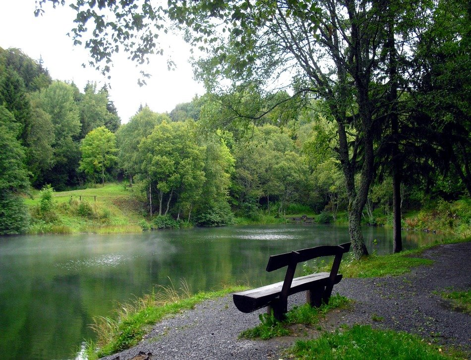 wooden bench near the picturesque pond