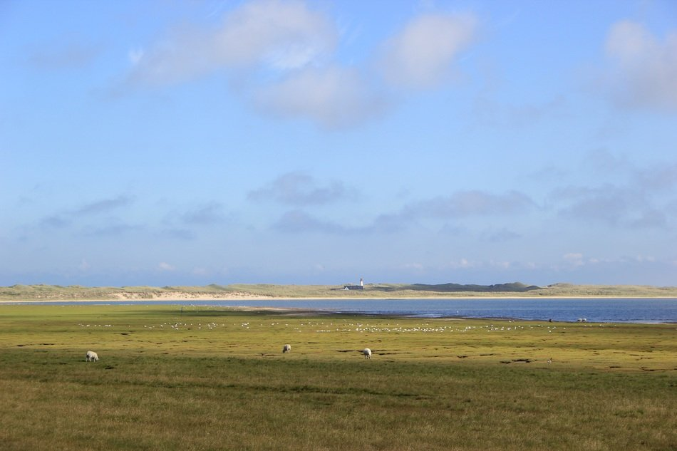 sheep on the North Sea coast, germany, sylt