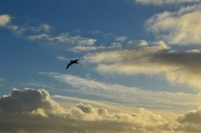 seagull flying in Cloud sky