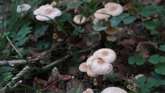 wild mushrooms in autumn