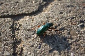green beetle on a stone close up