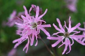 closeup photo of pink spring flowers