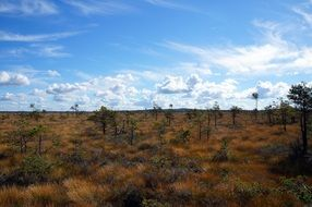 panorama of the steppe in Sweden
