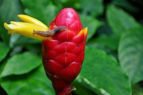 Snail on the exotic flower