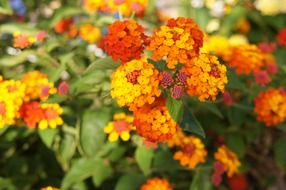 wonderful orange flowers