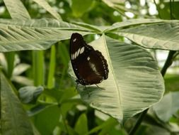 black butterfly on a green plant