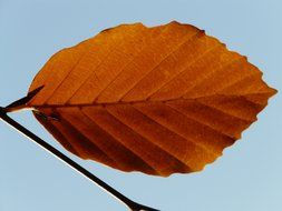 extraordinarily beautiful lonely leaf