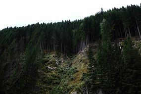 dark green forest on the mountainside