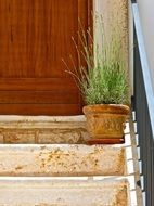 plant flowerpot potted steps