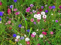 wild flowers of different colors on the field