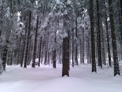 perfect winter forest