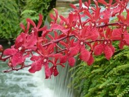 bright red orchid at the waterfall