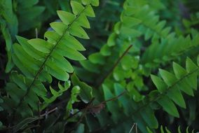green fern leaves at wild