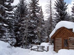 wooden cabin in winter forest, usa, colorado