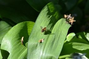 Flies on a green leaf in nature