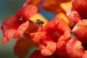 insect on a blooming flower in nature