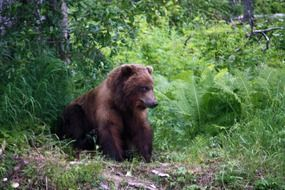 grizzly bear sitting near green plants