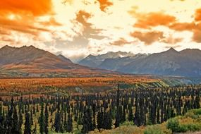 scenic sunset landscape, tundra and forest at fall, usa, alaska