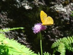 yellow spotted butterfly on a flower in the bright sun
