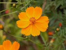 orange flower in summertime