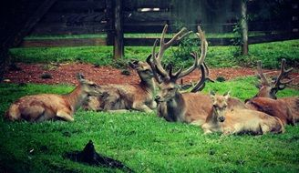 deer horns animals nature