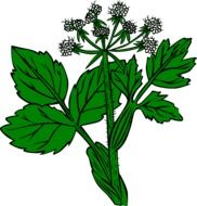 drawing of a wild poisonous green plant