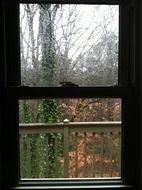 rain drops on open window to garden at fall