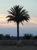haystacks and palm tree against the background of the evening sky in Mallorca