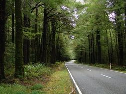 peaceful road in forest scene